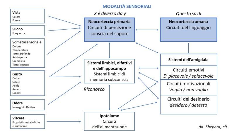 Modalita sensoriali
